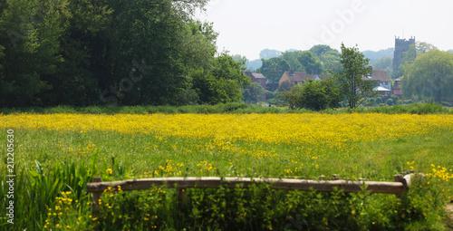 Fotobehang Meloen Buttercup Meadow