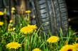 Departure by car in the countryside. Car wheel standing on the green grass with yellow dandelians