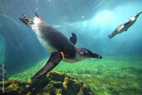 Aluminium Pinguin Penguins