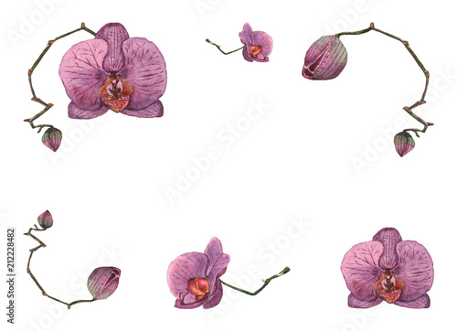 Hand drawn watercolor illustration of purple orchid flowers and buds isolated on the white background.