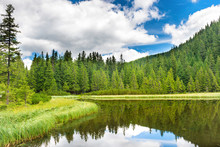"""Постер, картина, фотообои """"Blue water in a forest lake with pine trees"""""""