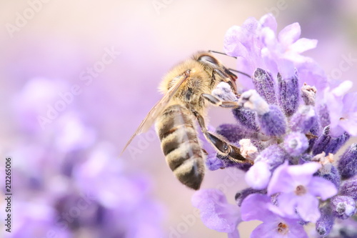 Aluminium Bee Bee on a lavender flower