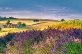 Fresh lavender field at sunset - 212280843