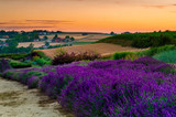 Fresh lavender field at sunset - 212281066