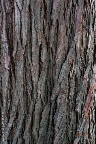 Tree Bark Texture - 212320051