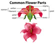 Science of Common Flower Parts