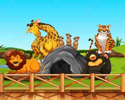 Fototapeta Various animals in a zoo