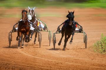 Race horses in run. A horses with a jockey runs along the racetrack track