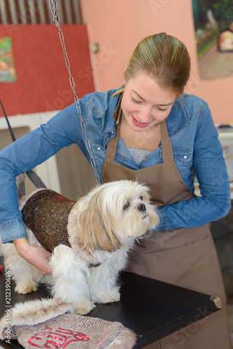 pet grooming business - 212390696