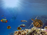 Underwater scene. Coral reef and turtle - 212414219