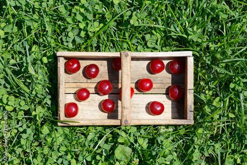 Fotobehang Kersen Harvesting Prunus cerasus sour cherrys fruit in their garden. Top view photo taken in the Poland in summer garden