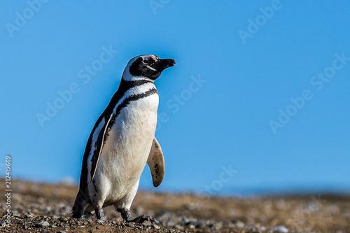 Aluminium Pinguin Chile