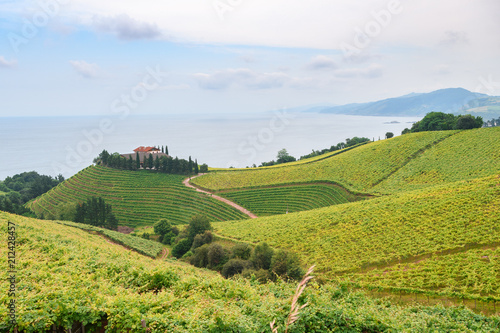 Fotobehang Wijngaard rolling vineyard landscape at getaria town, located at Basque Country, Spain
