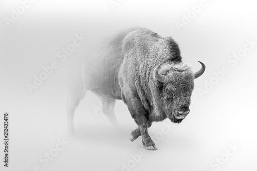 Fotobehang Bison bison walking out of the mist greyscale image