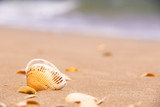 Shells on a beach and sea is behind - 212442844