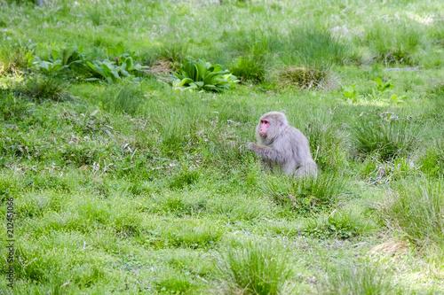 Fotobehang Olijf 草原の猿
