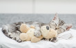 Leinwanddruck Bild - Cute baby kitten sleeping with toy bear