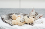 Cute baby kitten sleeping with toy bear - 212451416