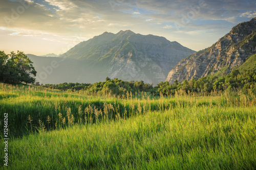 Fotobehang Pistache Green meadow in the Wasatch Mountains, Utah, USA.