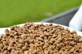 Dry food for dogs and cats. Pet meal on blurred green grass background. Selective focus - 212470201