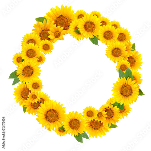 Wreath of sunflowers on a white background. Background with copy space.