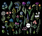 Big set of wild flowers isolated. Vector illustration.