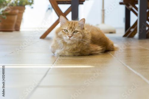 Fotobehang Kat cat lying on the floor of the terrace