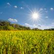 beautiful summer field, forest glade under a sparkle sun