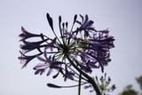 Natural purple flower - 212498639