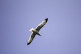 Seagull flying sky - 212498820
