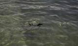 Dog swimming beach - 212499428
