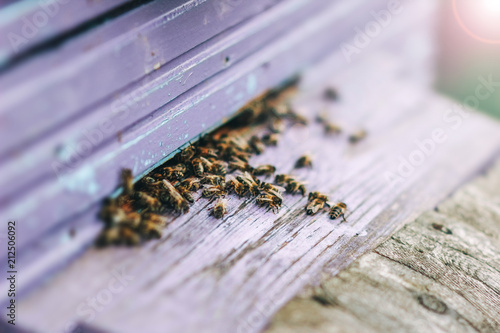 Aluminium Bee family of bees in a wooden hive in the summer.