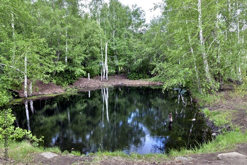 Aluminium Olijf a small forest pond framed by green trees