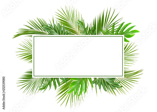 Green palm branches and monstera leaves with card for text