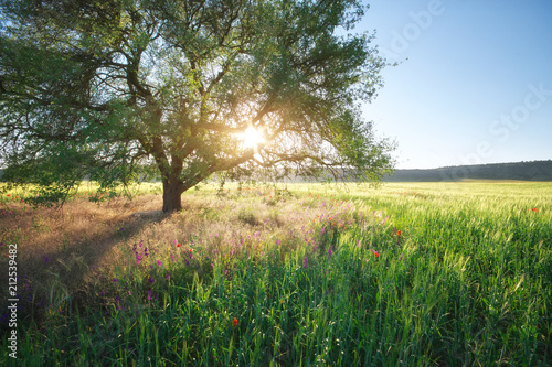 Green meadow and spring tree. Composition of nature.