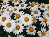Beautiful Flowers of the Summer Season