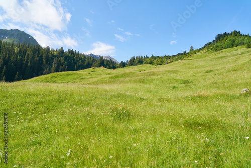 Aluminium Pistache Grüne Wiese als Weide in den Alpen