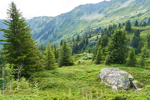 Tannenbäume in den Bergen der Alpen - 212559098