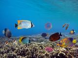 Underwater scene. Coral reef. - 212563422