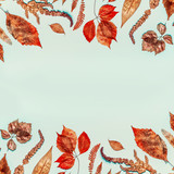 Autumn background with various  colorful dried and pressed fall leaves, top view, frame - 212578269