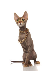 adorable metis cat wears gold necklace and looks to side