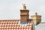 Chimney stack. Urban housing estate house roof tops with pigeon.