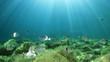 Leinwanddruck Bild - Underwater ocean background with fish