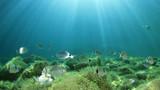 Underwater ocean background with fish  - 212597622