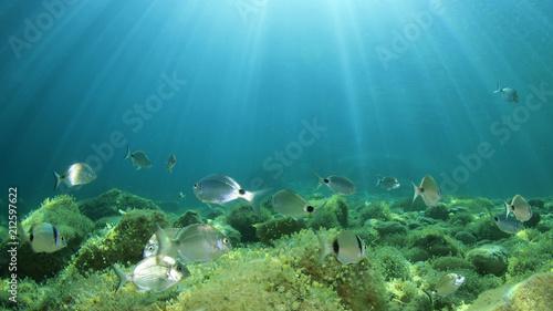 Leinwanddruck Bild Underwater ocean background with fish
