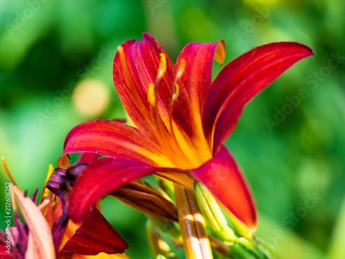 Fototapeta Blossom Close-up