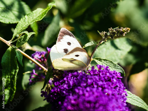Butterfly close-up - 212608079