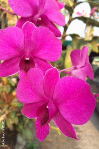 Beautiful pink orchid - 212612294