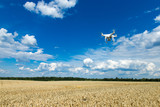 Flying drone above the wheat field - 212613297