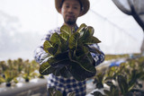 Asian farmer's produce from a vegetable hydroponics. - 212614036
